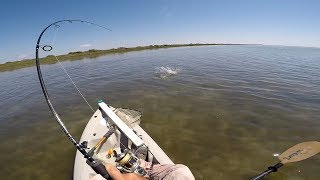 Cownose Rays and Some Redfish in POC