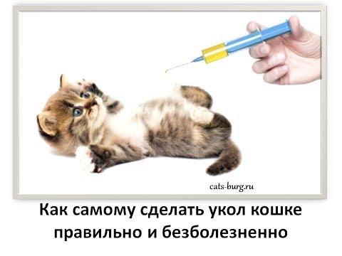 Учимся делать  укол кошке и не допускать ошибок / How To Give An Injection To A Cat