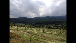 Ormancı - Sıdıka Ahmedova