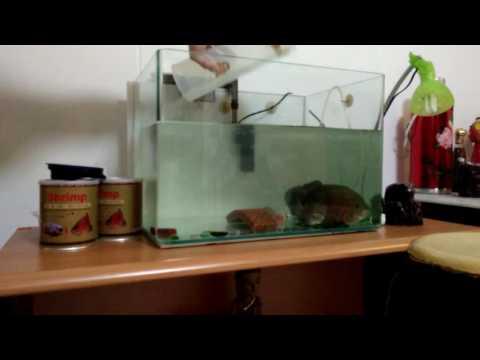 Clean OSCARS Fish Tank.