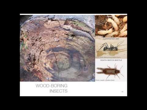 11.  Effects of Climate Change on the Long Term Deterioration Trends of Wood in Cultural Heritage