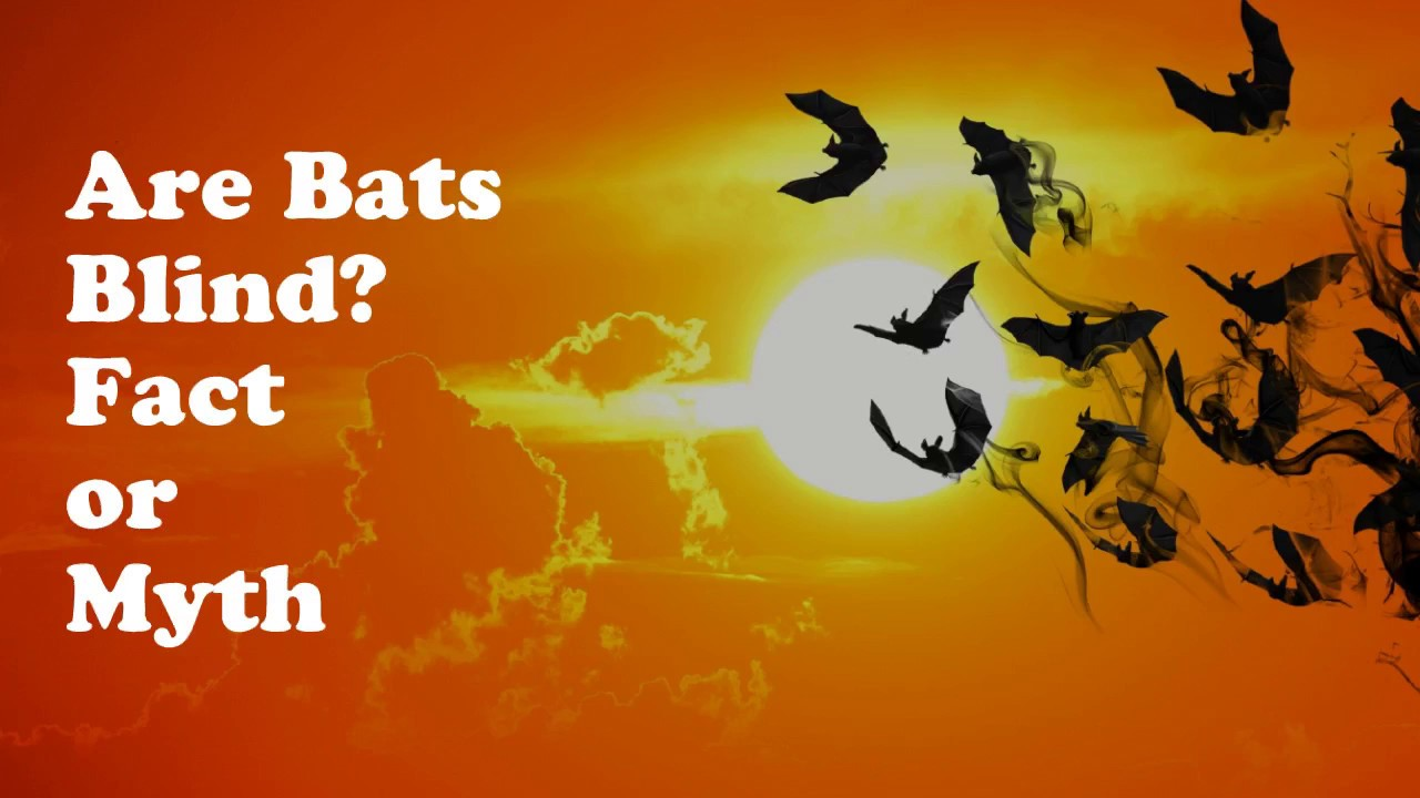 Bats Can See Bats Are Blind Is A Myth Youtube