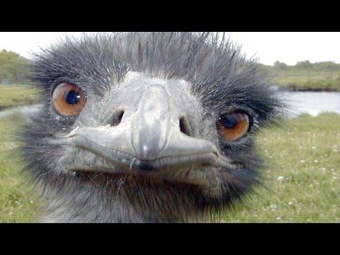 animal fails â … funny animals fails 2015 amp 2016 hd funny pets