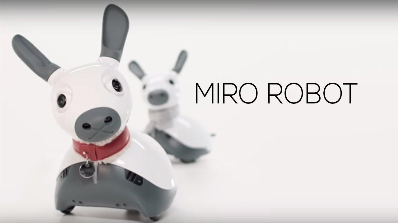 Resultado de imagen de MiRo robot