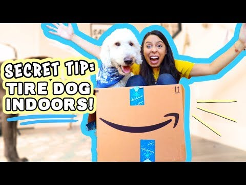 Exercise your Dog at HOME  No Yard, Raining? Do this!!!