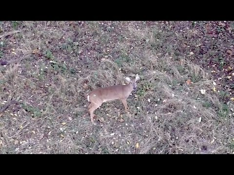 Presidents Island Doe Hunt 2015