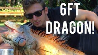 giant-wild-iguana-crocodilian-update-ep-21-chandler-s-wild-life