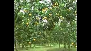 Profil Jaffa Oranges Agrowisata Batu