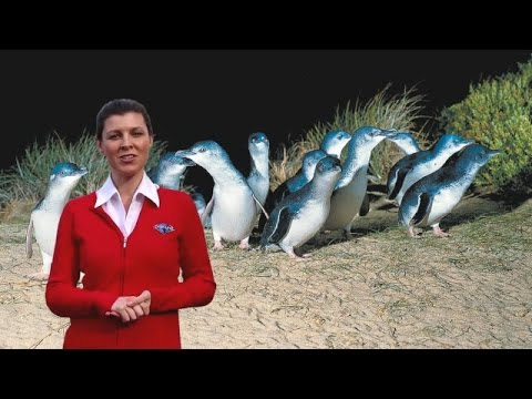 Gray Line Melbourne Penguin Parade Day Tour