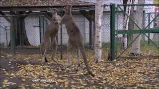 円山動物園.