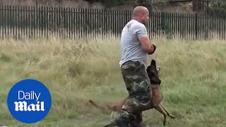 Incredible dog performs perfect tactical manoeuvres  Daily Mail