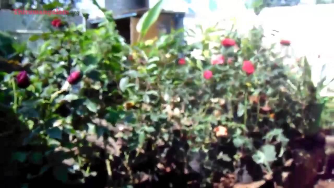Pothigai nursery garden thirumangalam madurai youtube pothigai nursery garden thirumangalam madurai solutioingenieria Images