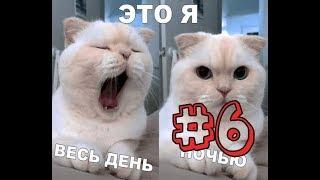 Лютые приколы, много смешных котиков