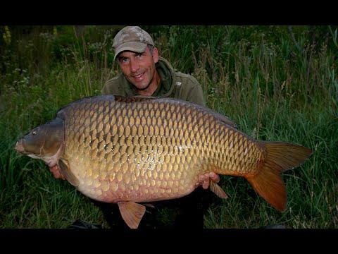 Giant Carp From Euro Aqua - Carp Fishing Blog June 2014