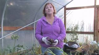 Plant Care & Gardening : When to Prune Daylilies