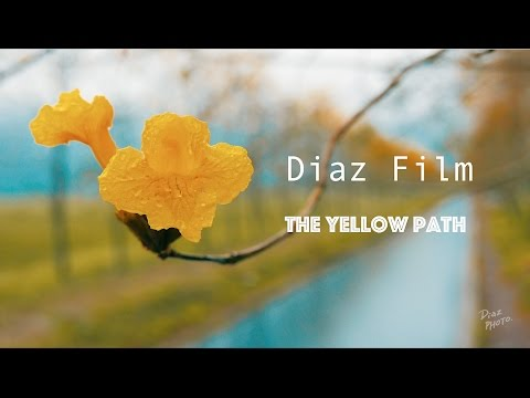 The Yellow path  #MyMavic