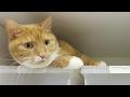 funny cat hiding in narrow space / 【猫 おもしろ】意地でも隙間に入りたかった猫