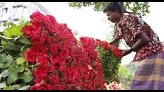 ফুল চাষ করে কোটি টাকা আয় করছে কৃষকরা | Flower Cultivation in Bangladesh