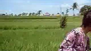 feel the wave in ricefield