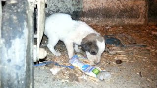 An abandoned little puppy starving at the trash