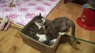 SBS [동물농장] - 젖물리는 수컷 고양이 딸랑이의 변심