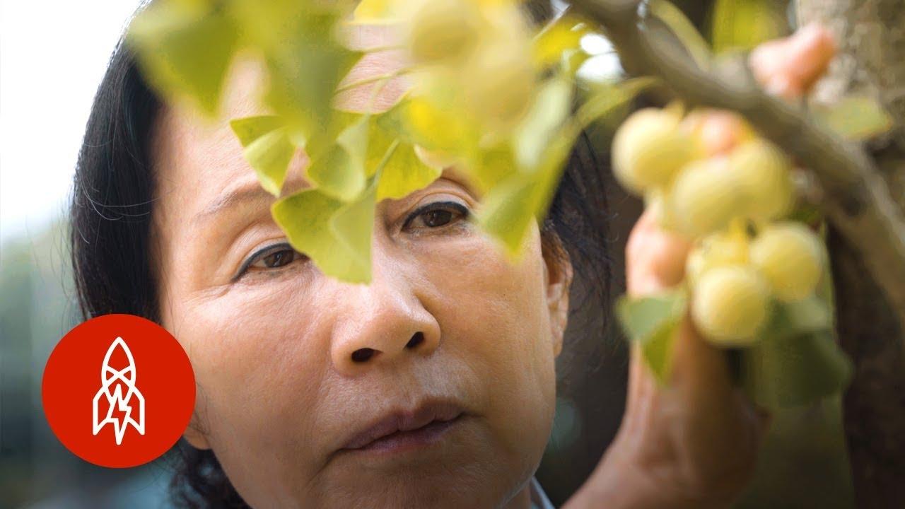 Brewing Korea's Hanega Vinegar for 35 Generations