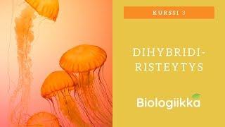 Periytymisen perusteet osa 2 - Dihybridiristeytys