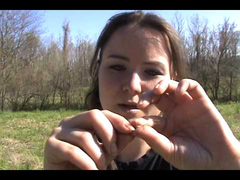 Locust Tree Fish Hooks