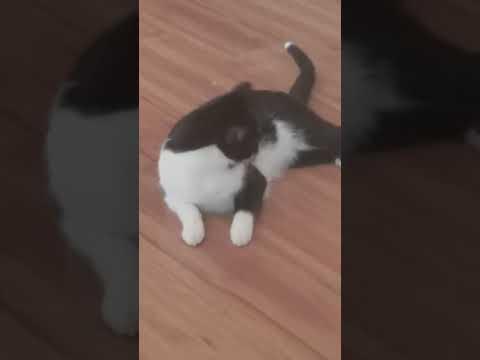 A cat documentary