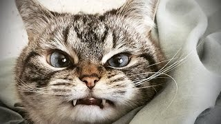 Repeat youtube video Cats Being JERKS 2016 (HD) [Funny Pets]