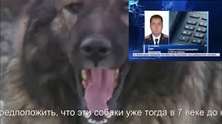Собаки загрызли бабушку в Чувашии