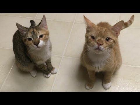 Странные котята остались одиночестве за 12 марта