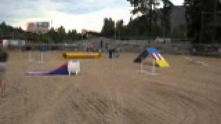 Mineral County Fair Dog Agility