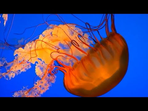 Björk - Unravel - Lyrics On Video
