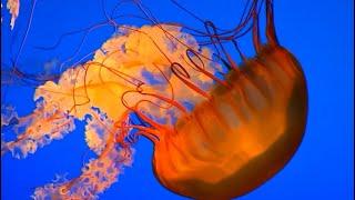Björk - Unravel — Lyrics video
