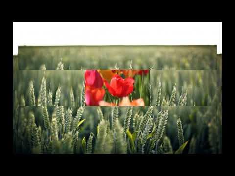 Download Flower  93