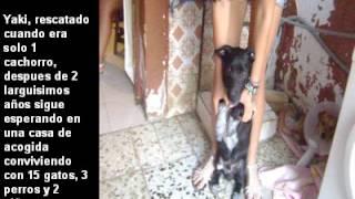 Asociacion La Sonrisa Animal de Sevilla TE NECESITAN (2 parte)