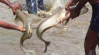 "Summer Machli Wala Hunt ""Fishing"" in Long Canal for Wallago Attu Catfish catch"