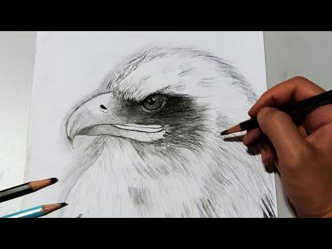 Drawing an eagle head  วาดภาพ นกอินทรีย์ โคตรง่าย