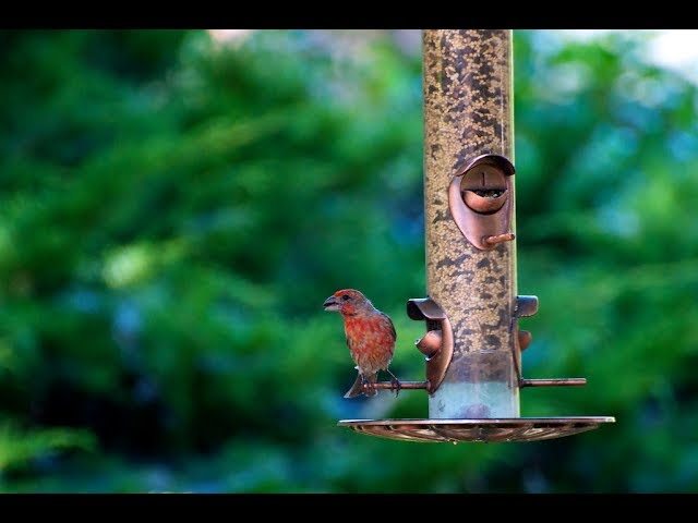 do-you-have-a-bird-feeder-here-s-why-you-may-want-to-take-it-down-and-quickly
