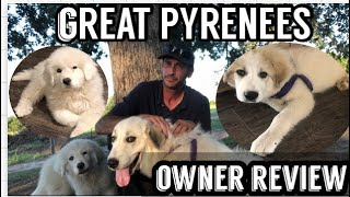 GREAT PYRENEES DOG REVIEWREAL REVIEW
