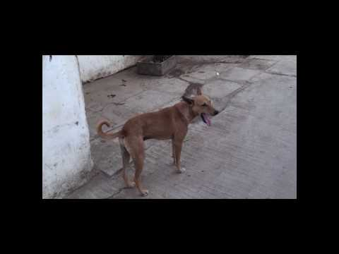 Street Dogs Fight Crime on India's Streets