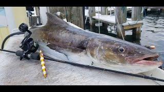 COBIA Slow Pitch Jigging Offshore Fishing