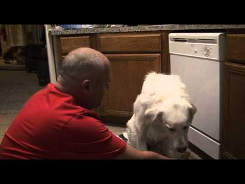 Dog hates many Smells