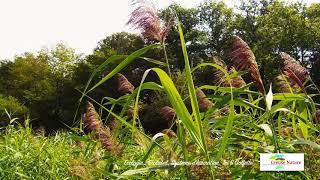 Campings naturistes Natustar - Creuse Nature Ecologie: Ecolabel, système d'épuration,