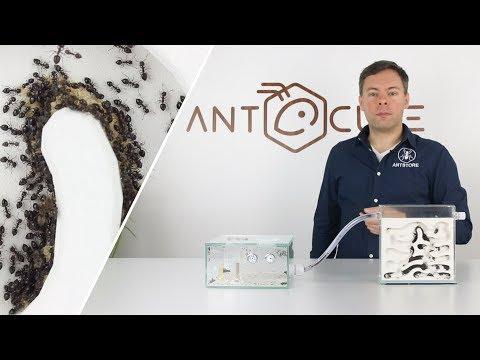 ANTCUBE Starter Set Gips Für Ameisen