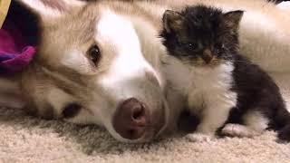 Кошка, которая считает себя собакой