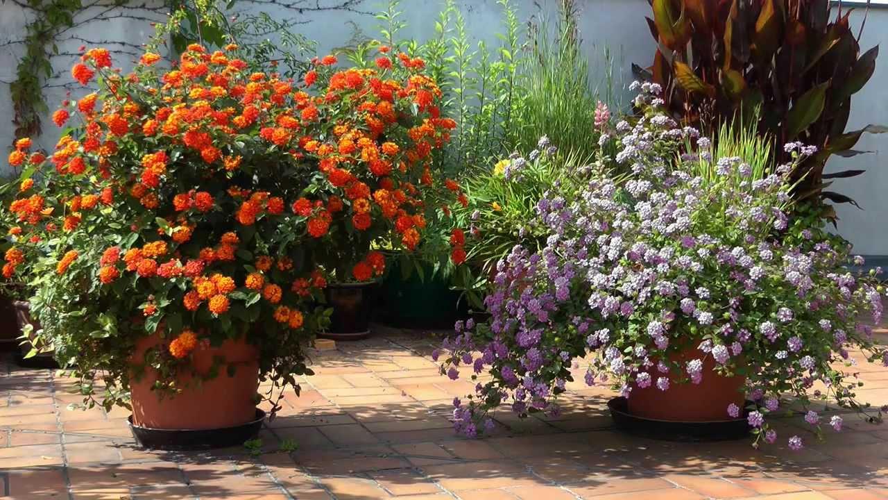 Winterharte Blumen Im August Pflanzen