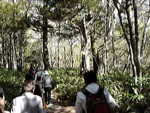 上高地林間散步 1