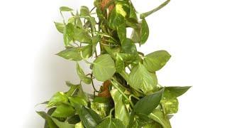 Convertir Poto colgante en Poto vertical - Jardinería